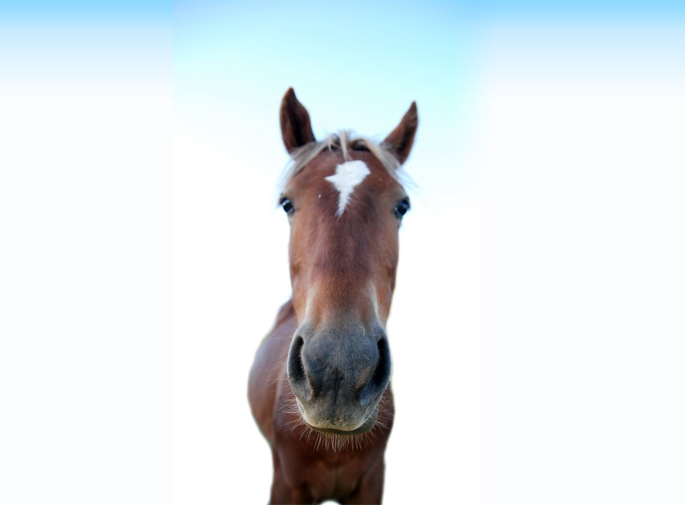 馬の画像デフォルト