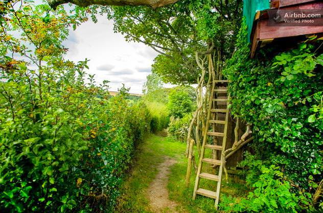 ツリーハウス入口の梯子