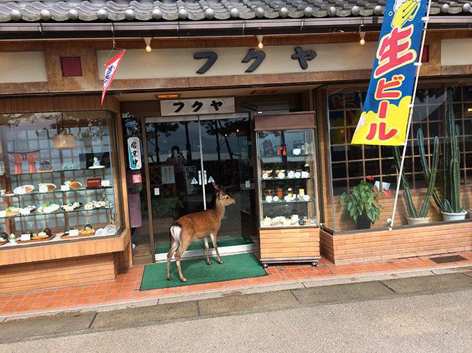 お店に入りたそうな鹿