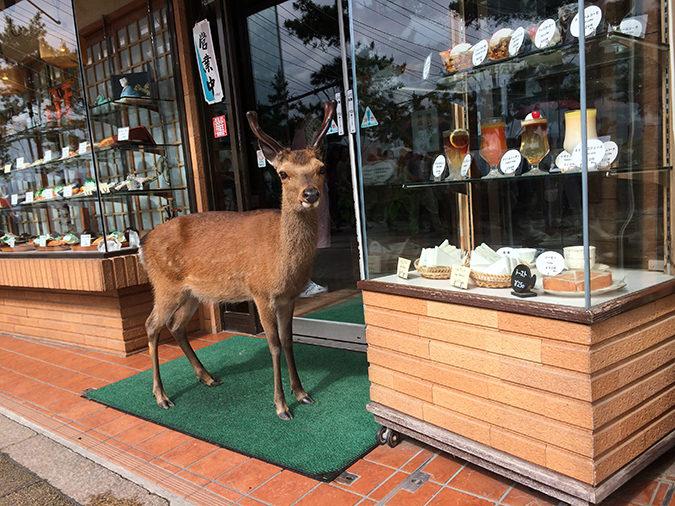 お店に入りたそうな鹿2