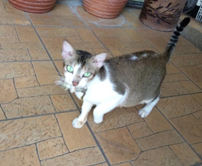 Th cat bird 20141022