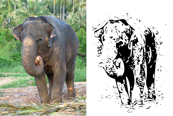 象さんをシェイプに