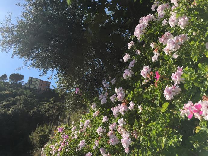 山肌に咲く花