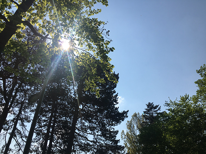 近所の公園で見上げた空