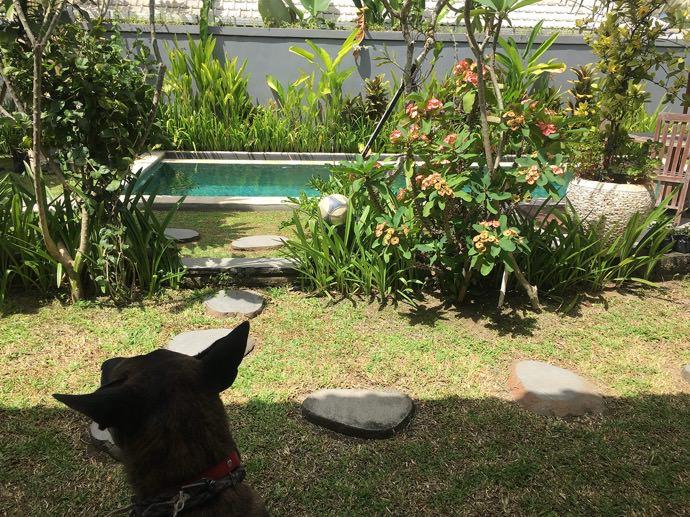 ゲストハウスの犬